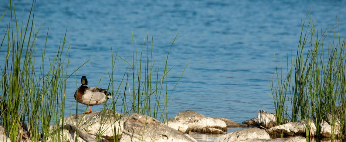 lago massaciuccoli particolare